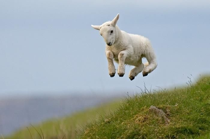 Spring!!!